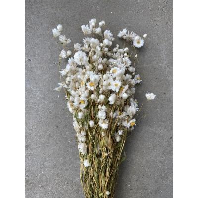 Gedroogde witte Rhodante