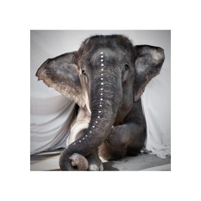 LW Elephant Adele